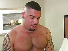 Swallow staight boy 2