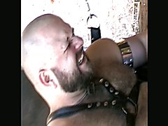 BearForest DavieBear gets sling fuck by Ital Our's huge cock
