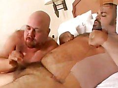 Dos Bears Comiendo todo