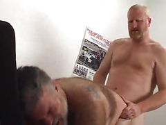 In the little office a hairy mature bear is surprised by his lover, another sexy bear. Watch...